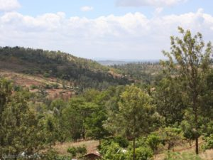 Kenya_Murang'a-2_0